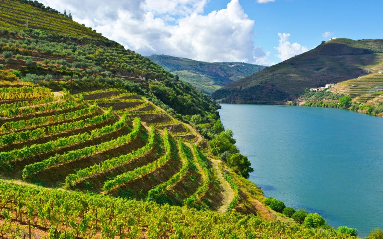 portugal wine header - Portuguese Wines